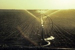 SIDE ROLL IRRIGATION SYSTEM WATERING COTTON, HIGH PLAINS OF TEXAS