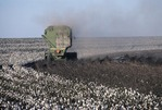 COTTON STIRIPPING, HIGH PLAINS OF TEXAS