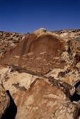 PETROGLYPHS OF GIRAFFES, ANTELOPES, RHINO & ELEPHANT, BUSHMAN, TWYFELFONTEIN, DAMARALAND, NAMIBIA