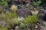 GEOMETRIC DESIGN PETROGLYPH, THREE RIVERS PETROGLYPH SITE, NEW MEXICO