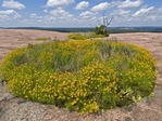 VERNAL PONDS WITH EXTENSIVE PLANT COMMUNITIES, ENCHANTED ROCK, CENTRAL TEXAS
