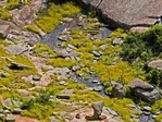 ARROYO AWASH WITH COREOPSIS, ENCHANTED ROCK, LLANO UPLIFT, CENTRAL TEXAS