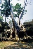 TREE ROOTS OVERGROWING BUILDING, PREAH KHAN, ANGKOR, CAMBODIA