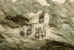 HANDPRINTS. FATE BELL SHELTER. TRANS-PECOS TEXAS