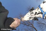 Man meets Dalmatian