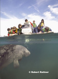 Children in boat looking at Manatee