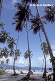 Beach at Las Galeras