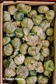 Box of Tomatillos