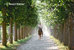 Polo Player riding horse along tree-lined road