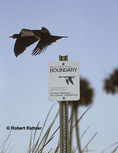 Anhinga flying past a National Wildlife Refuge sign