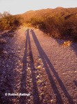 Shadow Silhouettes of waving people in Sonoran Desert
