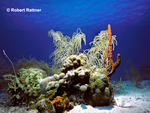 Coral Reef: hard & soft corals, sponges, sea feathers