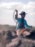 Pantaneiro cowboy driving cattle