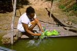 Woman washing vegetables in the Cuiaba River