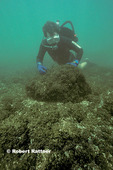 Dr David Garton studying Zebra Mussels on floor of Lake Erie