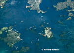 Aerial view of King's Bay and manatees - note sanctuary markers and divers