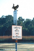 Double-Crested Cormorant perched on Manatee slow speed area sign