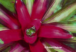 Bromeliad in Morne Trois Pitons National Park