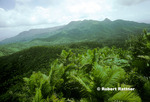 Sierra Palms and El Yunque Peak from Mt Britton Lookout in El Yunque
