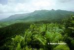 Sierra Palms and El Yunque Peak from Mt Britton Lookout in El Yunque