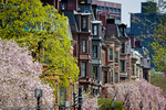Brownstones and Magnolias in Boston's exclusive Back Bay neighborhood, Boston, MA