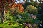 Asticou Azalea Garden, Northeast Harbor, ME
