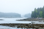 A foggy day at Schoodic Point in Acadia National Park, Maine, USA