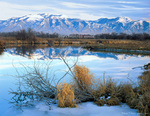 CACHE VALLEY, UTAH. USA. Bear River Range reflected in Logan River in early winter. Great Basin.
