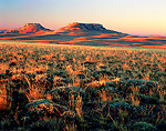 WYOMING. USA. Bunchgrass and sagebrush at sunrise on the Continental Divide near SouthPass. Oregon Buttes in the distance. Red Desert. Great Divide Basin.