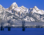 GRAND TETON NATIONAL PARK, WYOMING. USA. Grand Teton and Teton Range rise above frosted trees and fog on cold winter morning. Jackson Hole. Rocky Mountains.