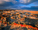 WYOMING. USA. Lichen on sandstone at sunset. Great Divide Basin. Ferris Mountains in distance.