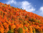 IDAHO. USA. Moon above bigtooth maples and cumulus clouds in autumn. Cache National Forest.