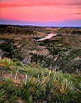 Yucca above the Missouri River at dusk. View  from the Woodhawk Trail in the Missouri Breaks. Upper Missouri Wild and Scenic River.