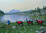 WYOMING. USA. Woman leads pack llamas along shore of Upper Pipestone Lake. Wind River Range. Bridger Wilderness. Bridger-Teton National Forest. Along Continental Divide Trail.
