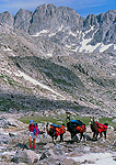 WYOMING. USA. Woman leads pack llamas below Mount Arrowhead. Wind River Range. Bridger Wilderness. Bridger-Teton National Forest. Along Continetal Divide Trail.