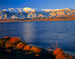 NEVADA. USA. Tumbleweeds on shore of Walker Lake. Mount Grant & Wassuk Range in distance. Great Basin.