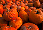 UTAH. USA. Pumpkins at roadside farmers market. October.