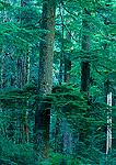 OPAL CREEK WILDERNESS, OREGON. USA. Ancient (old-growth) forest. Opal Creek drainage, OPAL CREEK WILDERNESS, OREGON. USA. Willamette National Forest.