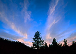 TETON WILDERNESS, WYOMING. USA. Cirrus fibratus clouds above forest at dusk. Mink Creek Canyon. Bridger-Teton National Forest.