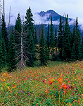 TETON WILDERNESS, WYOMING. USA. Meadow & conifers in autumn rain. Above North Buffalo Fork River Drainage. Joy Peak in distance. Absaroka Range. Bridger-Teton National Forest.