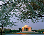 WASHINGTON, D.C. USA. Jefferson Memorial & cherry blossoms at sunrise. Tidal Basin. National Mall.
