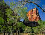ZION NATIONAL PARK, UTAH. USA. Angels Landing & cottonwoods in spring. Zion Canyon.