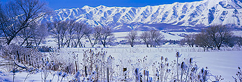 UTAH. USA. Pastures & willows below Wellsville Mountains in winter. Cache Valley. Great Basin.