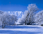 UTAH. USA. Hoarfrost on willow & cottonwood trees in edge of snow-covered pasture. Wellsville Mountains in distance. Cold winter day after foggy morning in Cache Valley. Great Basin.