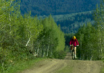UTAH. USA. Mountain biker on forest road. Bear River Range. Wasatch-Cache National Forest.