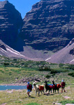 HIGH UINTAS WILDERNESS, UTAH. USA. Llama packers near Anderson Pass. Uinta Mountains. Wasatch-Cache National Forest.