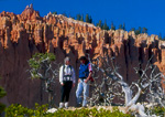 BRYCE CANYON NATIONAL PARK, UTAH. USA. Hikers & pinyon pine snags below Pink Cliffs of Bryce Canyon. Colorado Plateau.