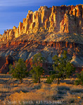 CAPITOL REEF NATIONAL PARK, UTAH. USA. Utah juniper trees below cliffs of Capitol Reef. Bottom to top- Moenkopi, Chinle, & Wingate Formations of Triassic Age.