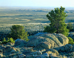 WYOMING. USA. Boulders & limber pines on Continental Divide above Great Divide Basin. Crooks Mountain. Red Desert.