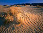 WYOMING. USA. Rabbitbrush & bird tracks in dunes below Ferris Mountains. Ferris Dunes, Great Divide Basin. Red Desert.